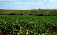 7-Alentejo_Evora_Wine_Region_Tours_Lisbon